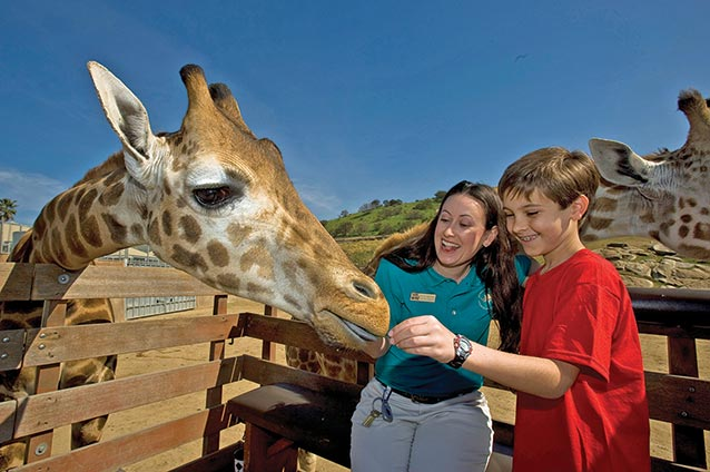 Boy and Guide Feeding Giraffe Courtesy SDZ Safari Park