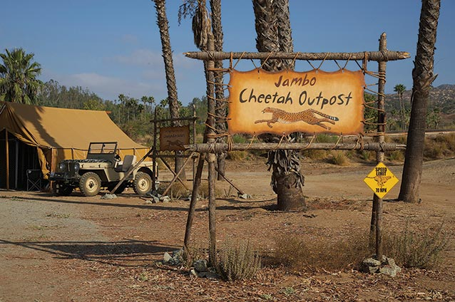 Cheetah Outpost Attraction Courtesy SDZ Safari Park