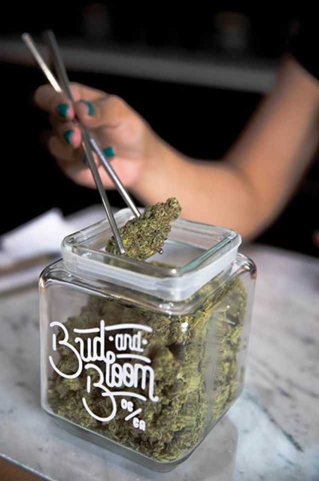Contemporizing Cannabis  at Bud & Bloom
