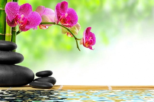 Create More Balance (and Less Stress) in Your Life With Feng Shui