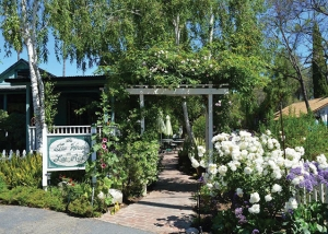 "Making Guests Their ""SpecialTea,"" the Tea House on Los Rios celebrates its  20th Anniversary"